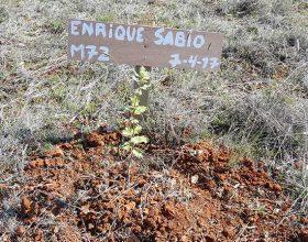 72 – Enrique Sabio Moya