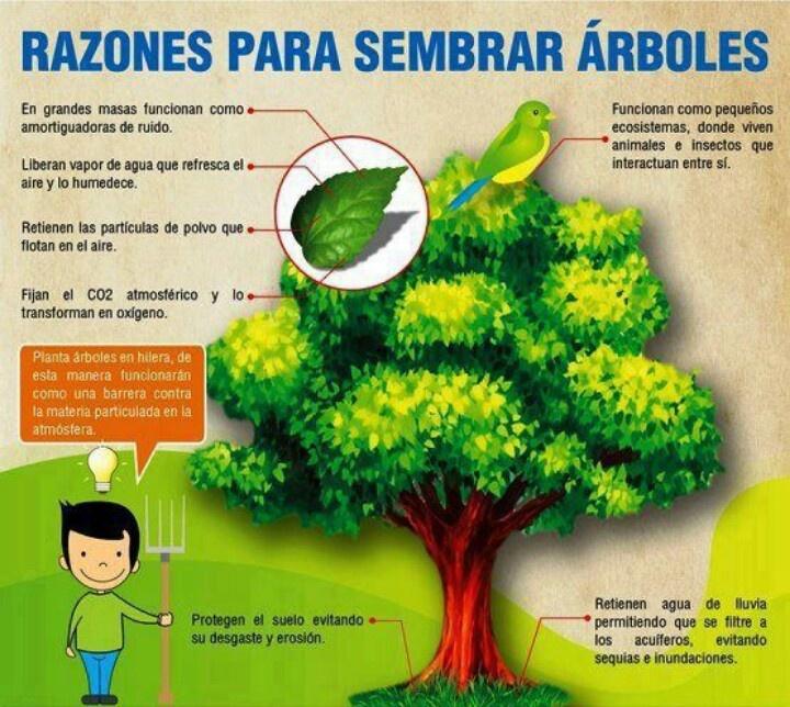 Ventajas de plantar rboles apadrina un rbol for Arboles para plantar en invierno