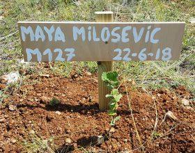 127 – Maya Milosevic González