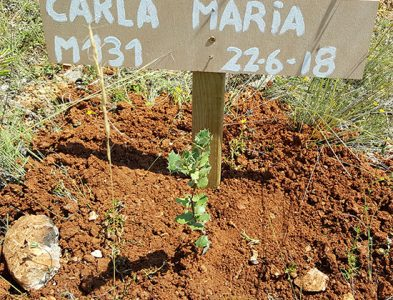 131 – CARLA MARIA CUNHA FERNANDES